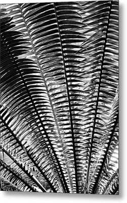 Fern Frond Metal Print by Steven Ainsworth