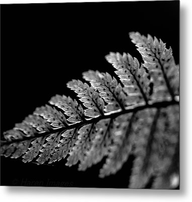 Fern In Cameo Metal Print by Haren Images- Kriss Haren