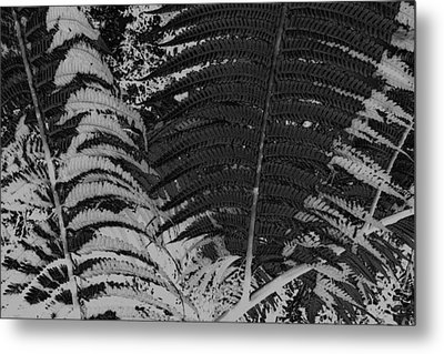 Ferns Metal Print by Colleen Cannon
