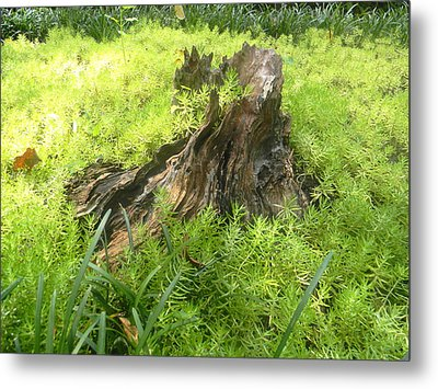 Metal Print featuring the photograph Ferns Of The Forest by Jodi Terracina