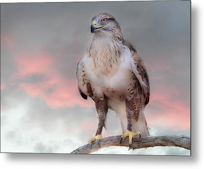 Ferruginous Hawk At Dusk Metal Print