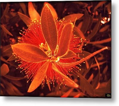 Fiber Optic Flower Metal Print