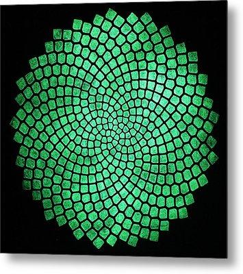 Fibonacci Sunflower Metal Print by Twilight Vision