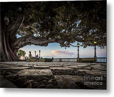 Ficus Magnonioide In The Alameda De Apodaca Cadiz Spain Metal Print by Pablo Avanzini