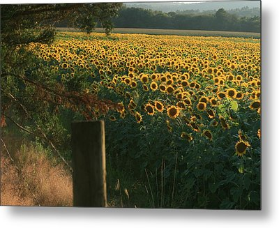 Field Dreams No.2 Metal Print