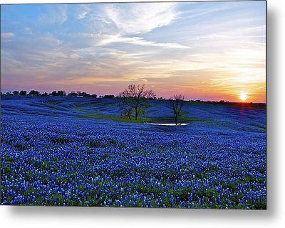 Field Of Blue Metal Print by John Babis