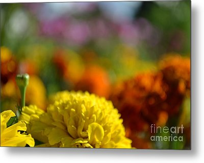 Metal Print featuring the photograph Field Of Carnations by Scott Lyons