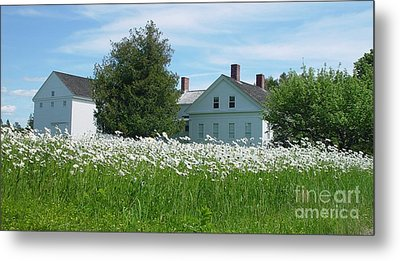 Metal Print featuring the photograph Field Of Daisies 2 by Christopher Mace