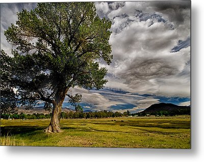 Field Of Dreams Metal Print by Cat Connor