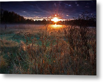 Field Of Dreams Metal Print by Suzanne Stout