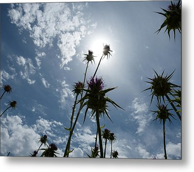 Field Of Dry Flowers Metal Print by Janina  Suuronen