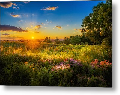 Field Of Flowers Sunset Metal Print by Mark Goodman