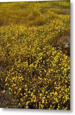 Field Of Goldfields In Park Sierra-ca Metal Print by Ruth Hager