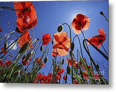 Field Of Poppies At Spring Metal Print by Sami Sarkis