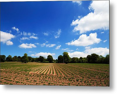 Field Of Potatoes, Near Inistioge Metal Print by Panoramic Images