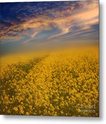 Field Of Rapeseed  Metal Print by Monika Pachecka