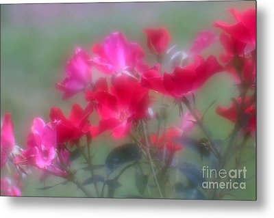 Metal Print featuring the photograph Field Of Roses by Mary Lou Chmura