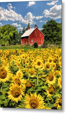 Field Of Sunflowers Metal Print by Christopher Arndt