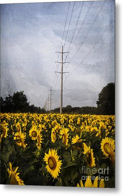 Field Of Sunflowers Metal Print by Elena Nosyreva