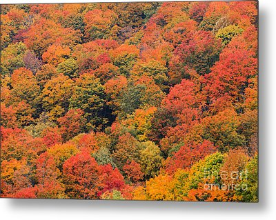 Field Of Trees From Above During Fall Foliage. Metal Print
