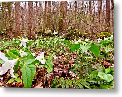 Field Of Trillium Metal Print