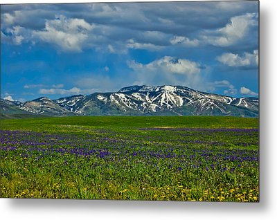 Metal Print featuring the photograph Field Of Wildflowers by Don Schwartz