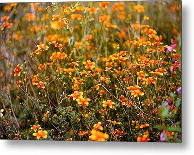 Field Of Wildflowers Metal Print