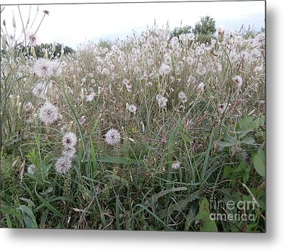 Field Of Youthful Dreams Metal Print by Joseph Baril