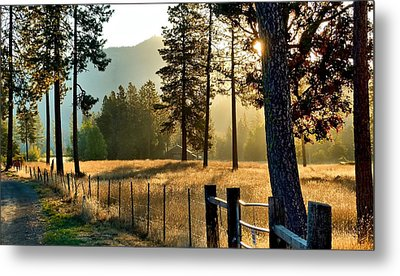 Metal Print featuring the photograph Fields Of Gold by Julia Hassett
