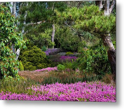 Metal Print featuring the photograph Fields Of Heather by Jordan Blackstone