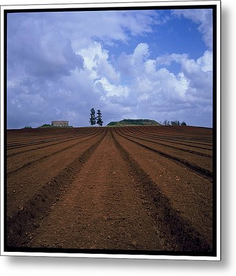 Fields Of Hod Hasharon Metal Print by Dubi Roman