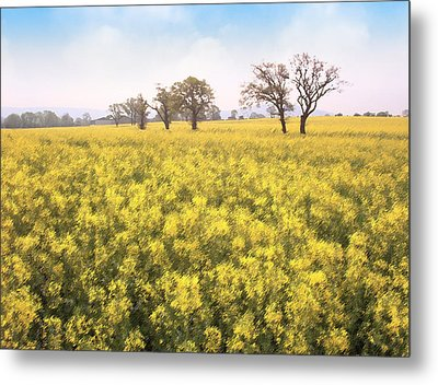 Fields Of Yellow Metal Print