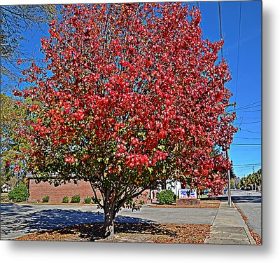 Fiery Tree Metal Print by Linda Brown