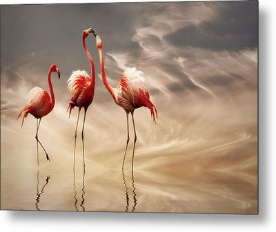Fighting ... Metal Print