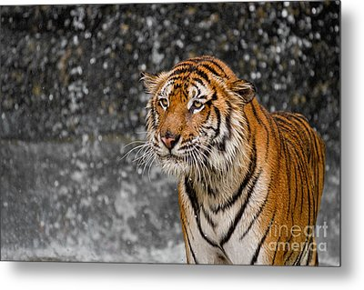 Final Drops Metal Print by Ashley Vincent