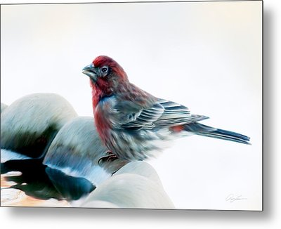 Finch Metal Print by Ann Lauwers