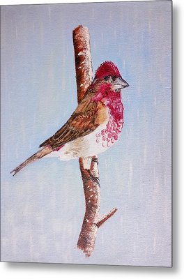 Finch Metal Print by Valorie Cross