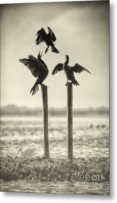 Find Your Own Perch Metal Print