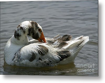 Fine Feathered Friend Metal Print by Sandy Molinaro