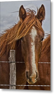 Fine Filly Metal Print by Mamie Thornbrue