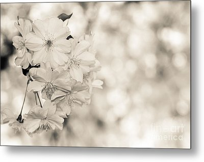 Finest Spring Time - Bw Metal Print by Hannes Cmarits