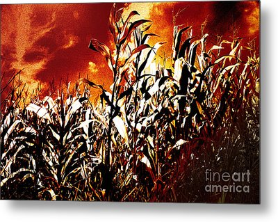 Fire In The Corn Field Metal Print