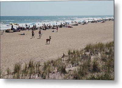 Fire Island Beach With Deer Metal Print by June Jacobsen