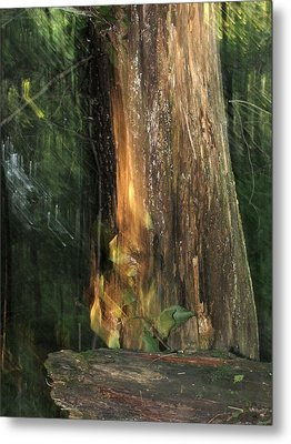 Metal Print featuring the photograph Fire Leaf by Melissa Stoudt