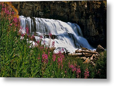 Fireweed Blooms Along The Banks Of Granite Creek Wyoming Metal Print by Ed  Riche