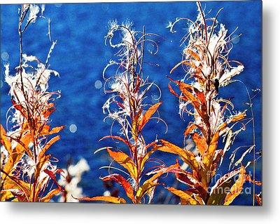Fireweed Flower Metal Print by Heiko Koehrer-Wagner