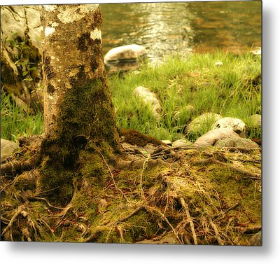 Firmly Rooted Metal Print by Bonnie Bruno