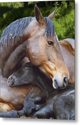 First Born Metal Print by Diane C Nicholson