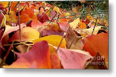 Metal Print featuring the photograph First Day Of Fall by Andrea Anderegg