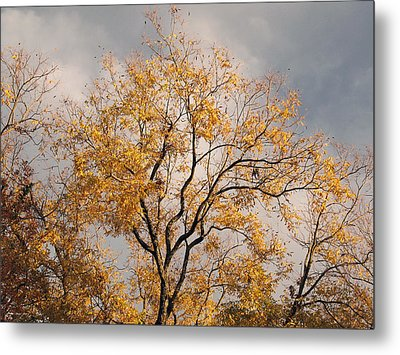 First Day Of Winter 3 Metal Print